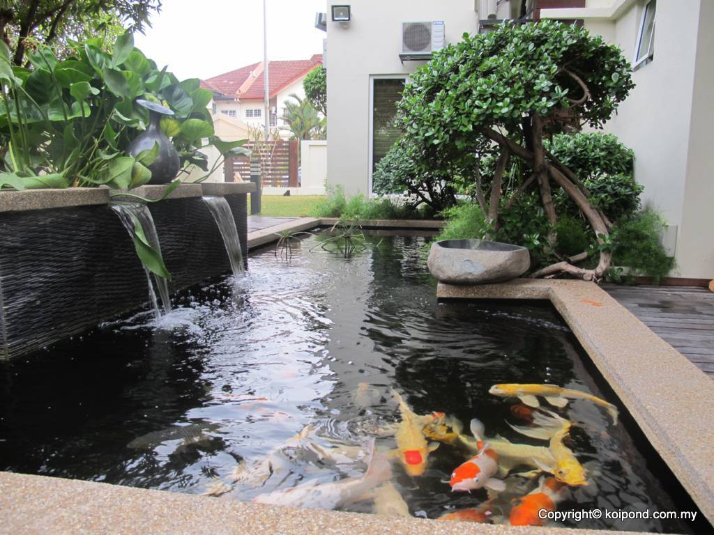 Fish pond design fountain design trading for Garden pond specialists