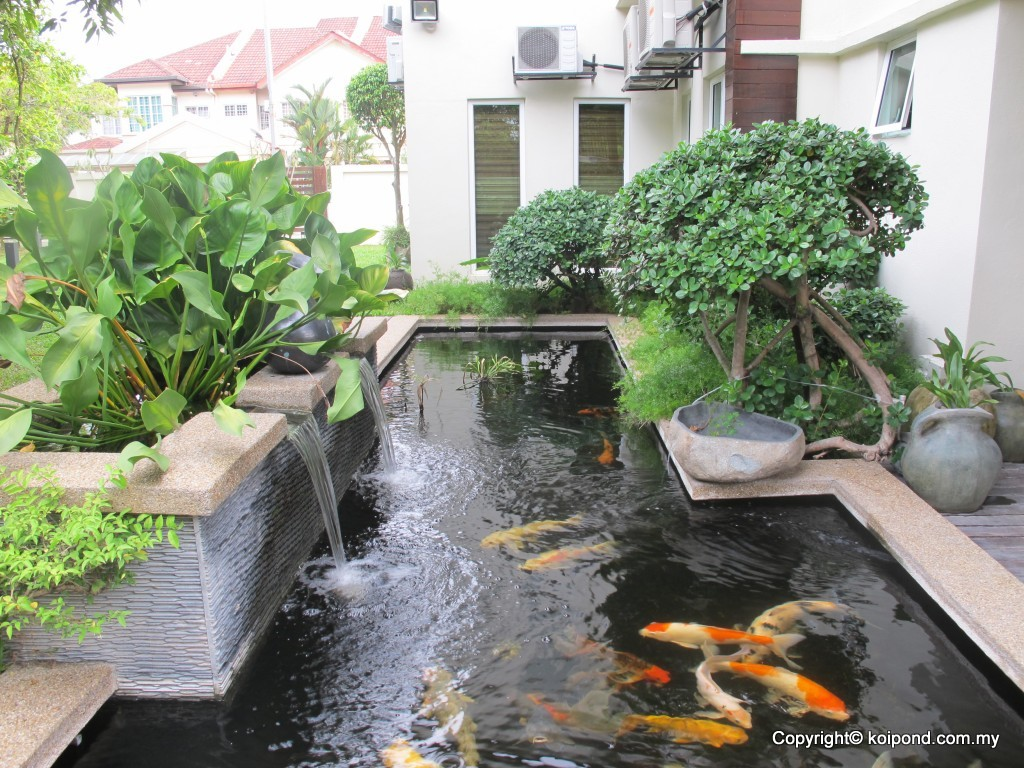 Fish pond designs pictures - Fish Pond Designs Pictures 8