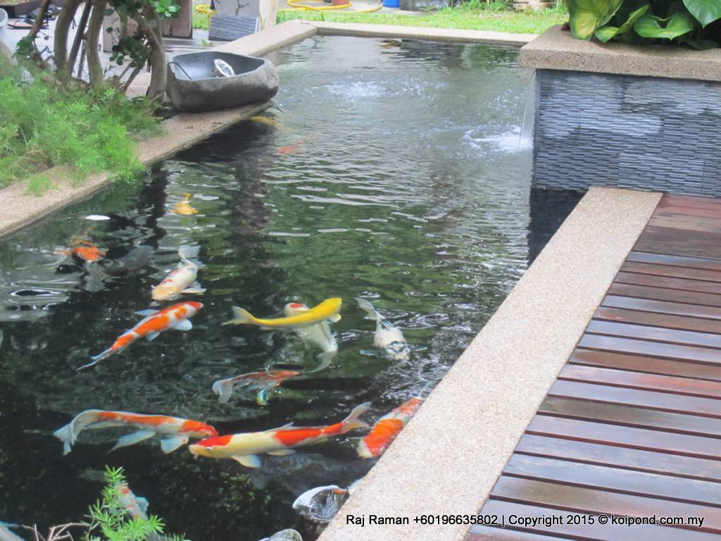 Fish pond design fountain design trading for Contemporary koi pond design